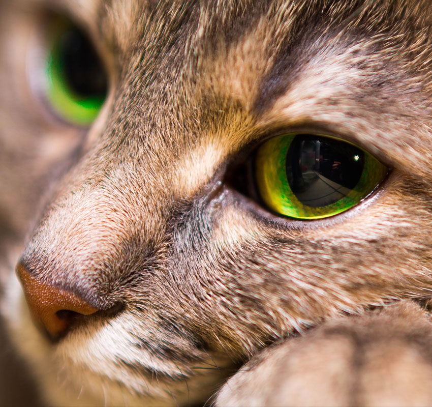 Portrait of a kind cat with big eyes, close up.