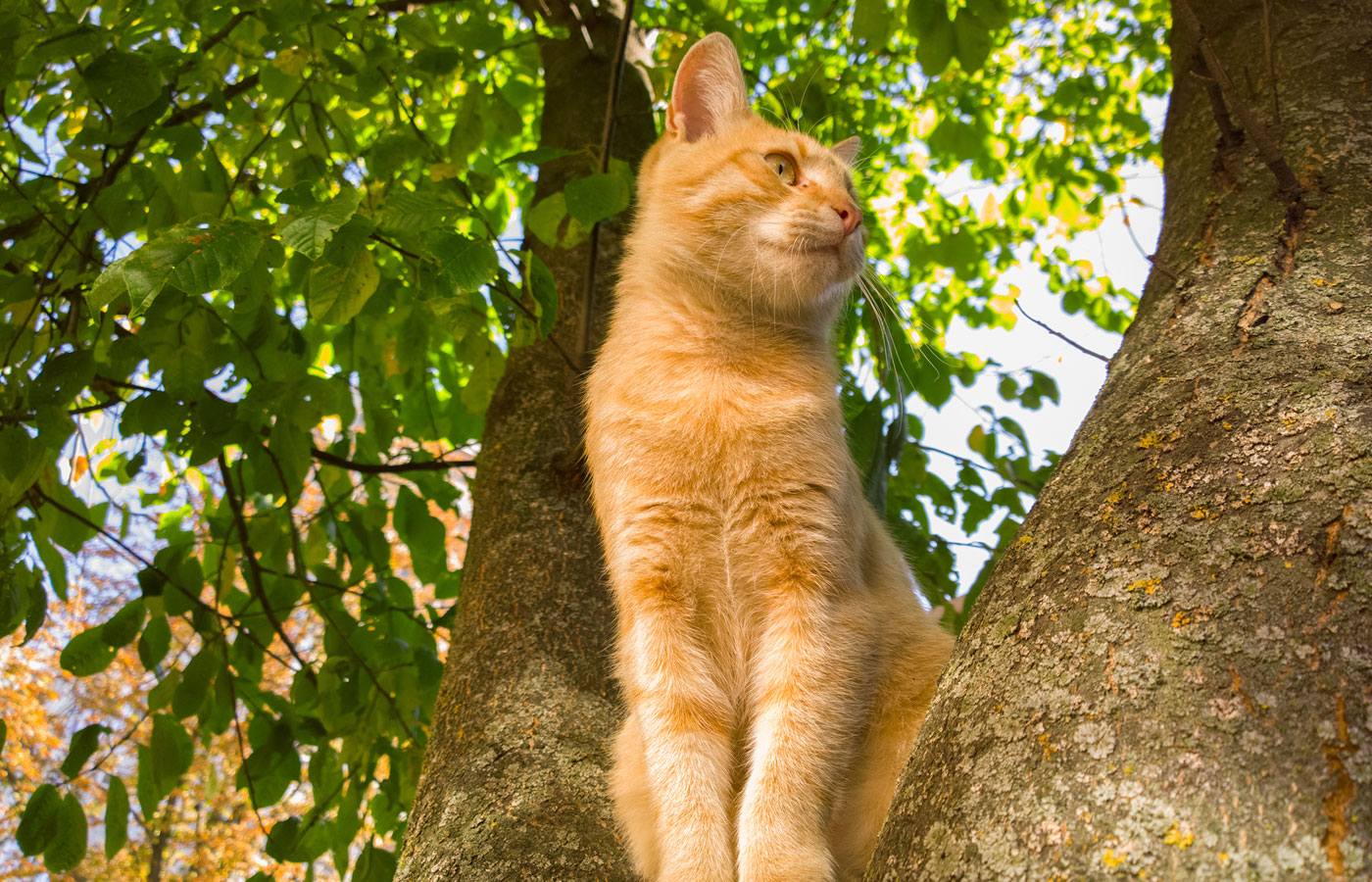 Cat on a tree.
