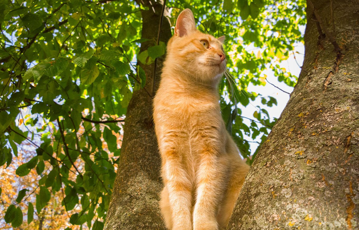 Cat on a tree.