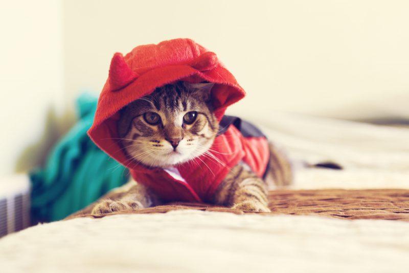 Halloween Kitty