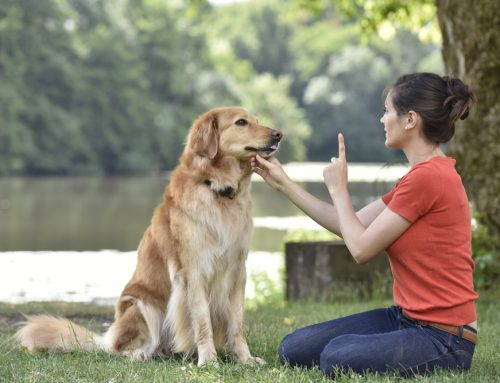 Why You Should Train Your Pet Using Positive Reinforcement Methods