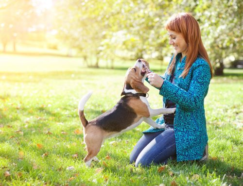 Arthritis in Pets: Signs and Treatment