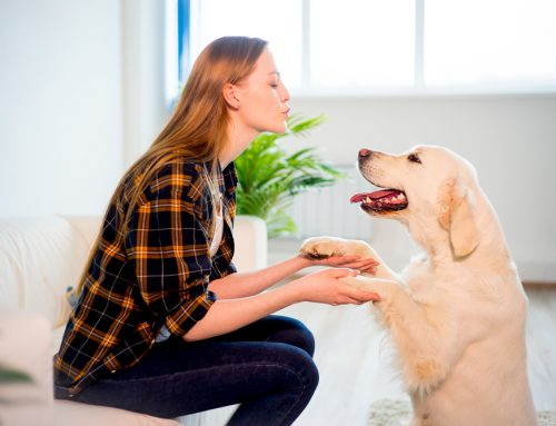 Preserving the Human-Animal Bond Through Dental Health